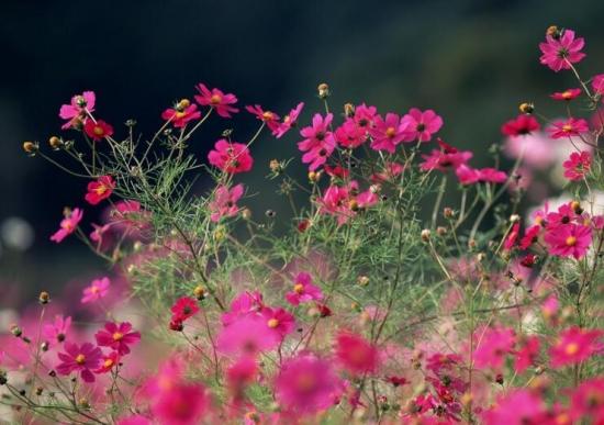 室内盆栽花卉如何选购