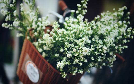 哪些花可以做干花
