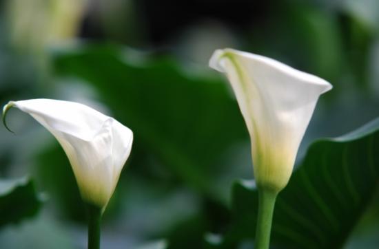夏天哪些花不能多浇水