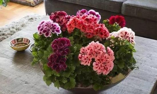 哪些植物不能在室内摆放,快进来看看!有可能你中毒了都不知道呢!