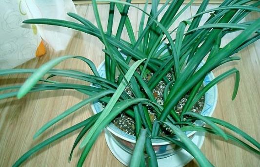 盘点那些不能在室内摆放的植物