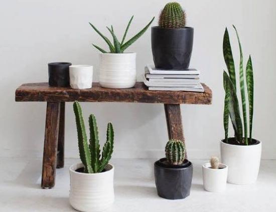 哪些植物好看又好养活-仙人掌