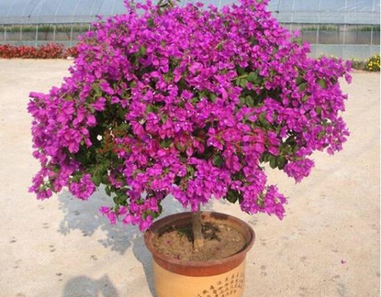 天气越热长得越好的耐高温植物