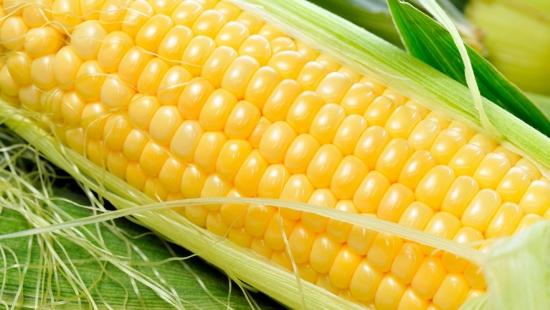 甜玉米是不是转基因_甜玉米是转基因的吗:不是,是通过杂交优良品种筛选培育出来的