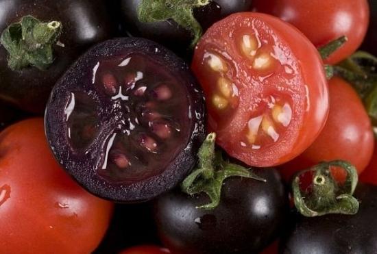 转基因番茄