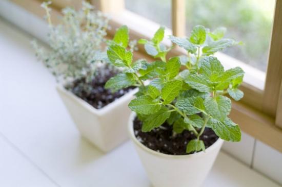 养花有哪些好处:能增强人体免疫力,调理人体植物神经的平衡;预防和治疗部分慢性病
