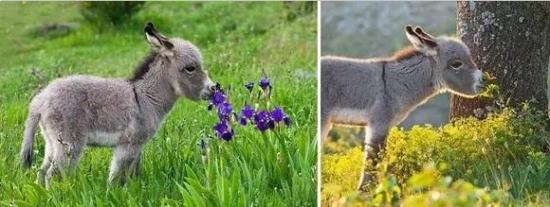 心有猛虎在细嗅蔷薇_动物与自然:动物与植物有趣的瞬间