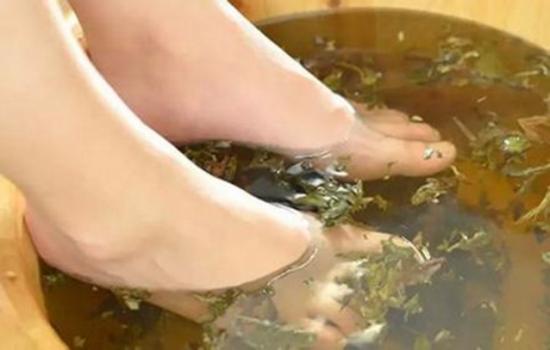 艾叶泡脚的正确方法,艾叶泡脚有什么好处?