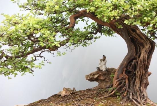 光合作用是绿色植物_植物科普 大树底下好乘凉是什么原理