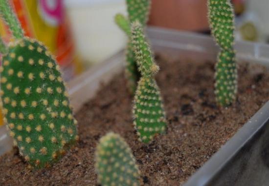 新栽的植株施肥